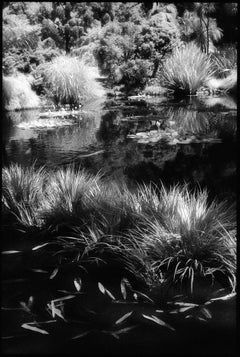 Huntington Gardens XII - Black and White Landscape Photography of Pond & Plants