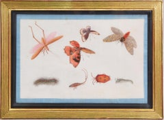 Chinese Export Watercolours on Pith Paper, set of twelve Butterflies and Insects