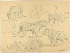 Studies of Tigers - Original Charcoal Drawing by Willy Lorenz - Mid 20th Century
