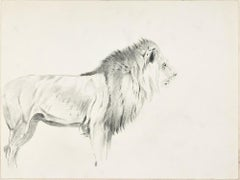 Study of Lion and Lioness - Original Pencil Drawing by Willy Lorenz - 1940s