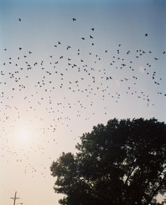 Omaha Sketchbook: Starlings, Omaha, NE - Contemporary Photography, American