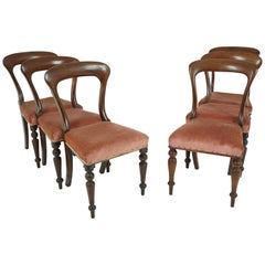 Antique 6 Victorian Mahogany Dining Chairs John Taylor & Son, Scotland 1860 1723