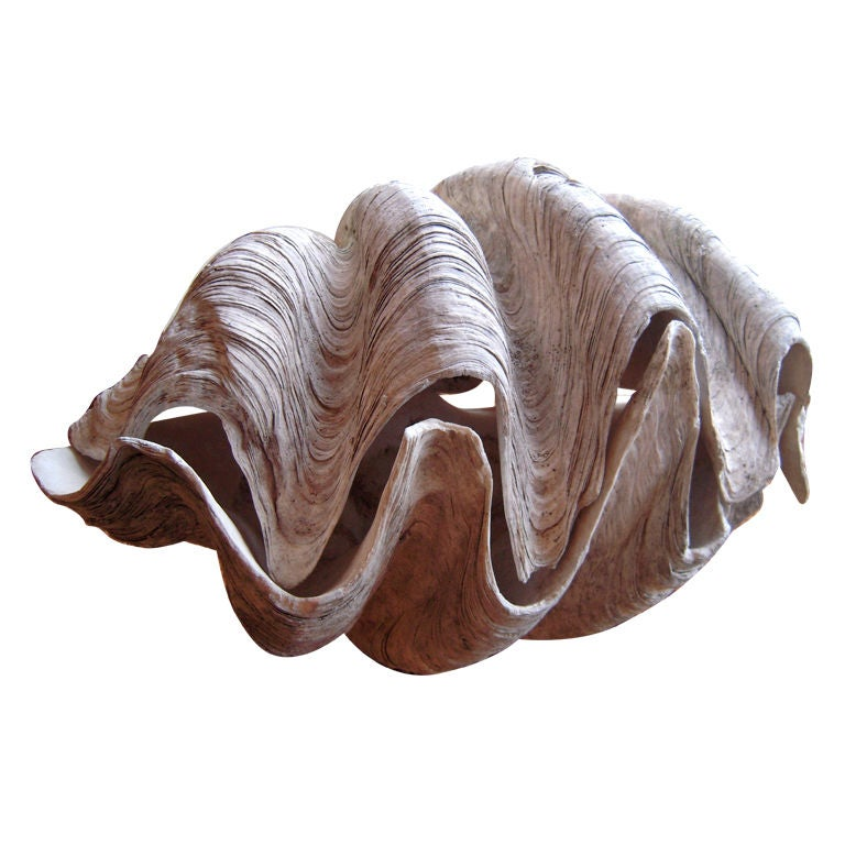 Giant clam shell prop