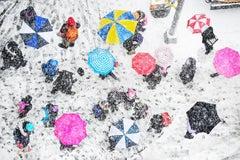 Pink Umbrellas in the Snow, New York City
