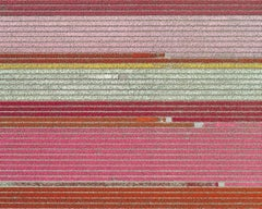 Tulip Fields 05 (Netherlands), Aerial abstract photography