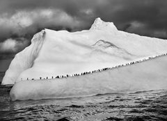 Chinstrap Penguins on an Iceberg, South Sandwich Islands, 2009