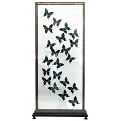 Butterflies in Flight Black and Green with Blue Tips Mounted