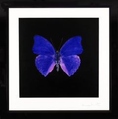 Damien Hirst, Cobalt Butterfly Soul Etching, 2007