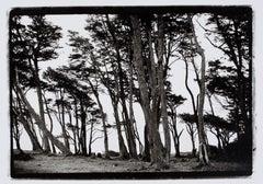 "Hideoki, Black & White Photography, Trees, Chile, 2008, 16"" x 20"""