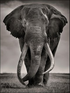 Preserver of peace I, Kenya, Elephant