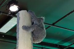 Espaces sans espèces III (Koala)