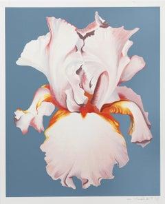 White Iris on Blue II