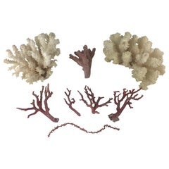 Natural White and Pink Corals, Seashells