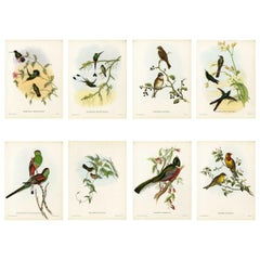 Set Eight Cream Mounted Exotic Bird Pictures Lithographs John Gould, 1804-1881