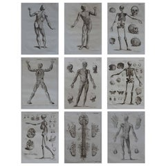 Set of 9 Anatomical Prints by A.Bell, 18th Century