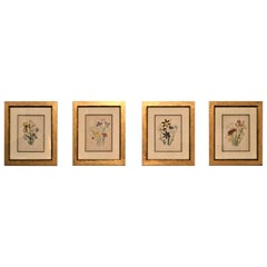 Set of Four 19th Century Botanical Lithographs, Hand Painted, Gilded Frames