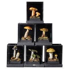 Set of Six Antique Plaster Botanical Models of Mushrooms in Individual Showcases