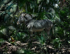 Untitled #181  – Simen Johan, Photography, Colour, Jungle, Zebra, Palm tree