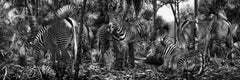 Untitled #182  – Simen Johan, Photography, Animals, Forest, Structure, Zebra