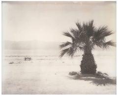 Salton Sea Palm Tree (California Badlands)