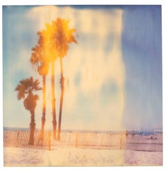 Santa Monica Palm Trees - Stranger than Paradise