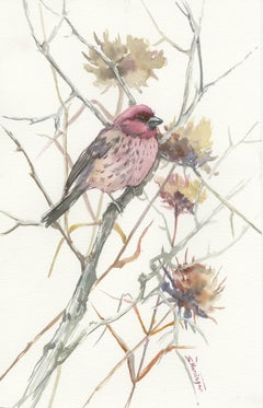 House Finch in the Field (Vertical)