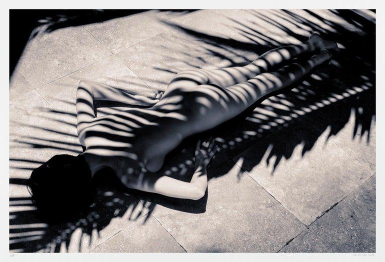 A.K. Nicholas Black and White Photograph - Palm Zebra, Photograph, Archival Ink Jet