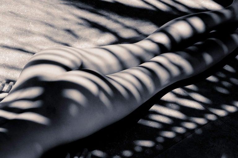 Palm Zebra, Photograph, Archival Ink Jet - Gray Black and White Photograph by A.K. Nicholas