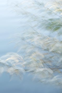 NATURAL IMPRESSIONISM, Photograph, Archival Ink Jet