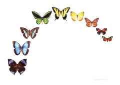 Butterfly Rainbow, Painting, Watercolor on Watercolor Paper