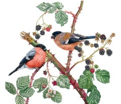 Bullfinches and Blackberries, Painting, Watercolor on Paper