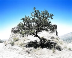 Arbol Andalucia, Photograph, Archival Ink Jet