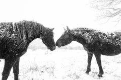 SNOW HORSES, Photograph, C-Type