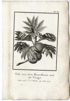 Branch of a Breadfruit Tree by J.S. Klauber - Etching / engraving - 18th Century