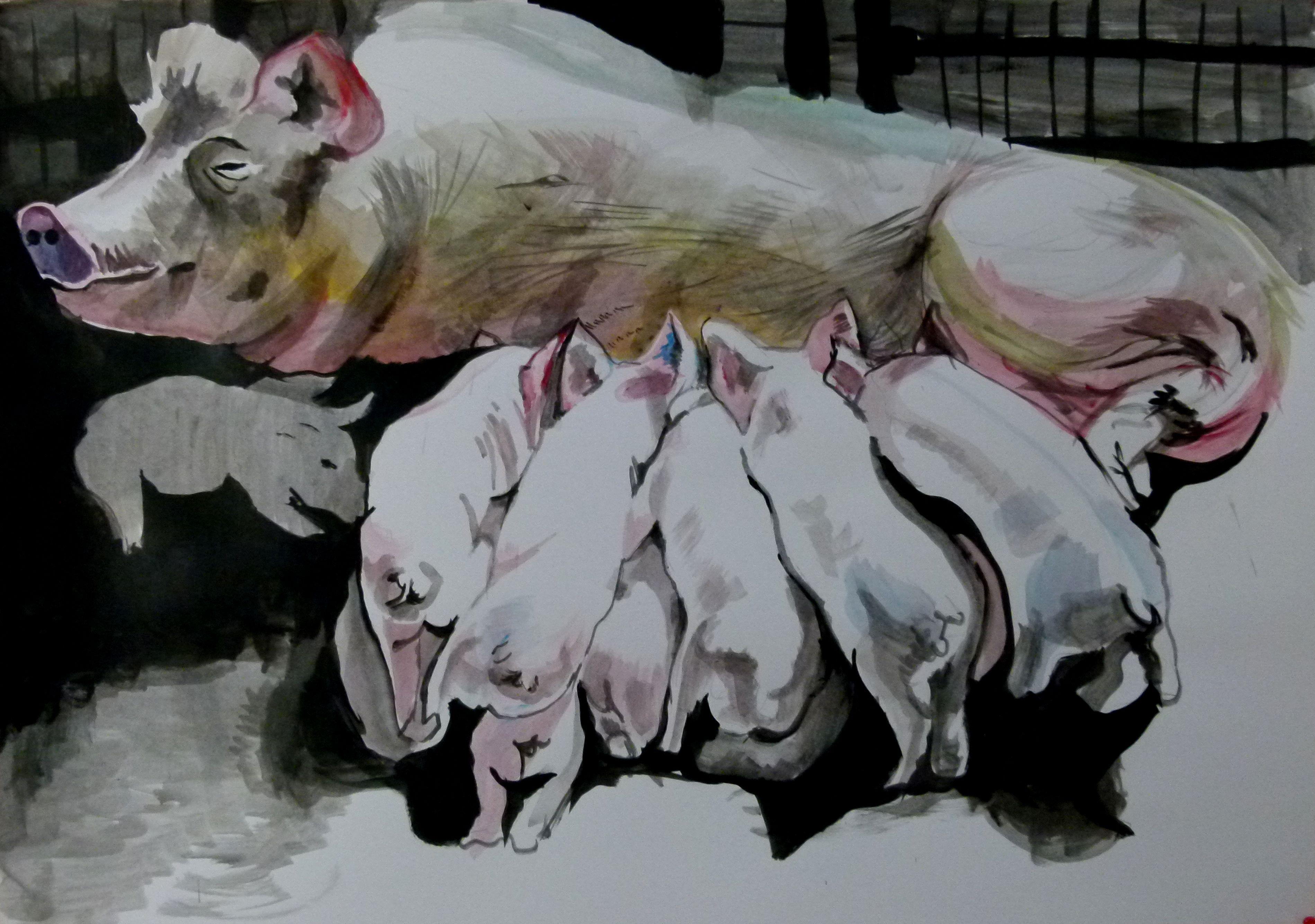 pigs, Painting, Acrylic on Paper