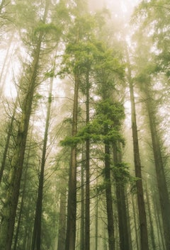 Forest Morning, Photograph, Archival Ink Jet