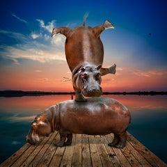 Photography Print - Animal Art - Gillie and Marc - Hippos balancing at sunset