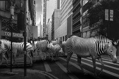 Photography Print - Animal Art - Gillie and Marc - Zebra Crossing