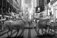 Black White Photography - Art Print - Gillie and Marc - Animal Zebra NYC