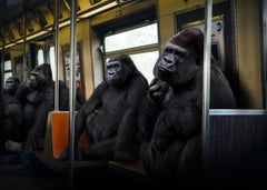 Photography - Art Print - Gillie and Marc - Gorillas riding the train