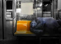 Photography - Pop Art Print - Gillie and Marc - Gorilla on his daily commute