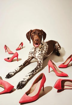Photography Print - Pop Art - Gillie and Marc - Hugo Pup with pink heels