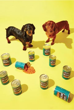 Photography Print - Pop Art - Gillie and Marc - Fergie and Sid Daschund Pups