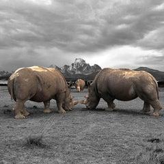 Photography Print - Animal Art - Gillie and Marc - Last Three Rhinos Kenya