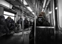 Black White Photography - Pop Art Print - Gorillas work hard play hard