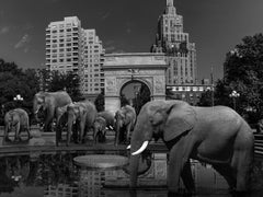 Black White Photography - Pop Art Animal Print - Elephants staying cool
