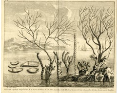 Water plants and coral near Indonesia by Valentijn - Engraving - 18th Century