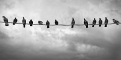 Whispers From Above - METAL PRINT WALL ART, Photograph, C-Type