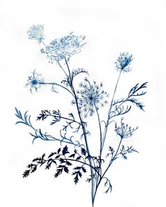 Queen Anne's Lace No. 11, Painting, Watercolor on Watercolor Paper