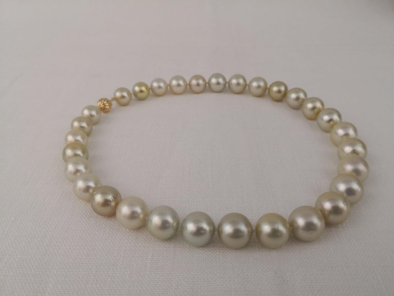 Round Cut Golden South Sea Pearl Round Shape For Sale